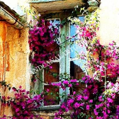 Finestra di Trastevere con fiori