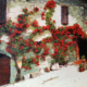 Roma vicolo con fiori di Trastevere